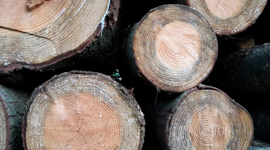 Ruw hout